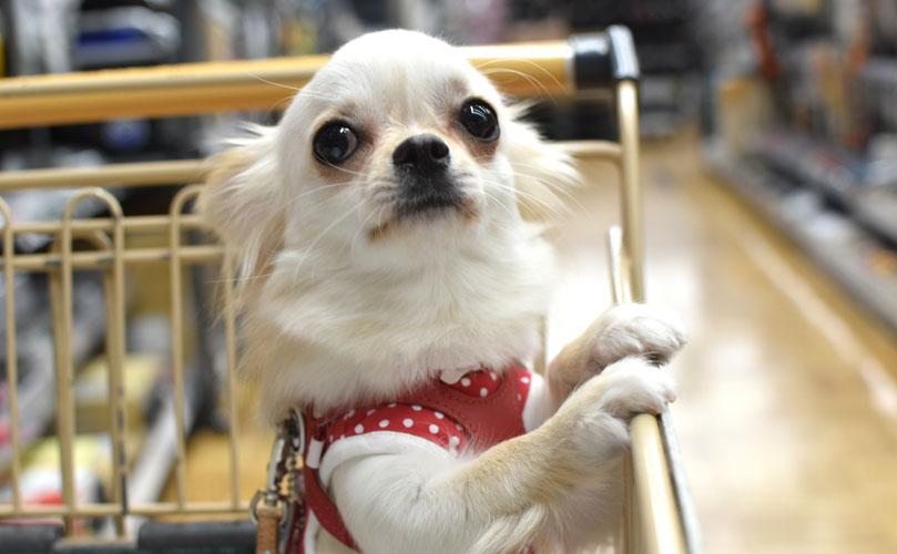 毎週月曜日&金曜日、店内にて犬のトレーニングレッスン開催中。